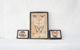 Vintage specimen trio
