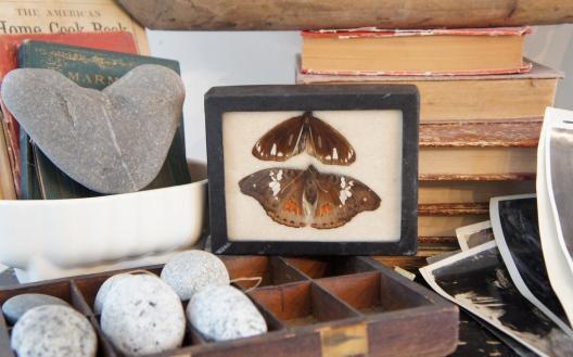 Moths specimen